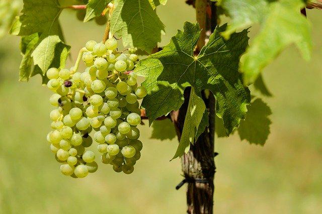 """The True Vine"" John 15:1-4"