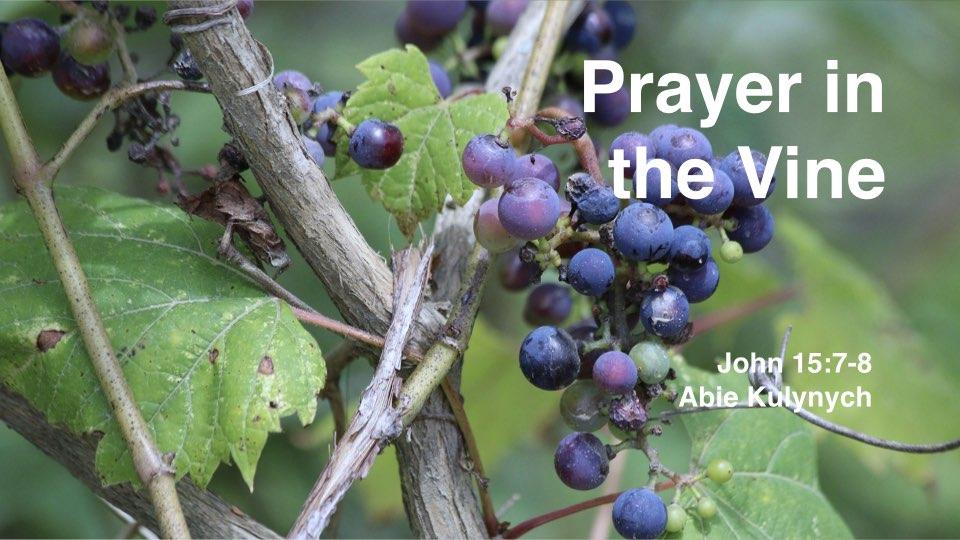 """""""Prayer in the Vine"""" John 15: 7-8"""