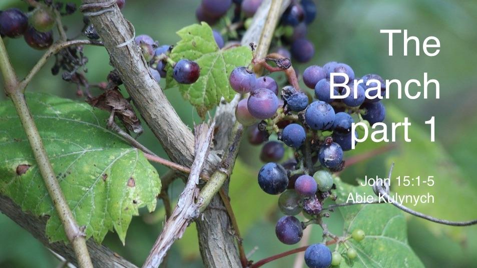 """The Branch part 1"" John 15:1-5"